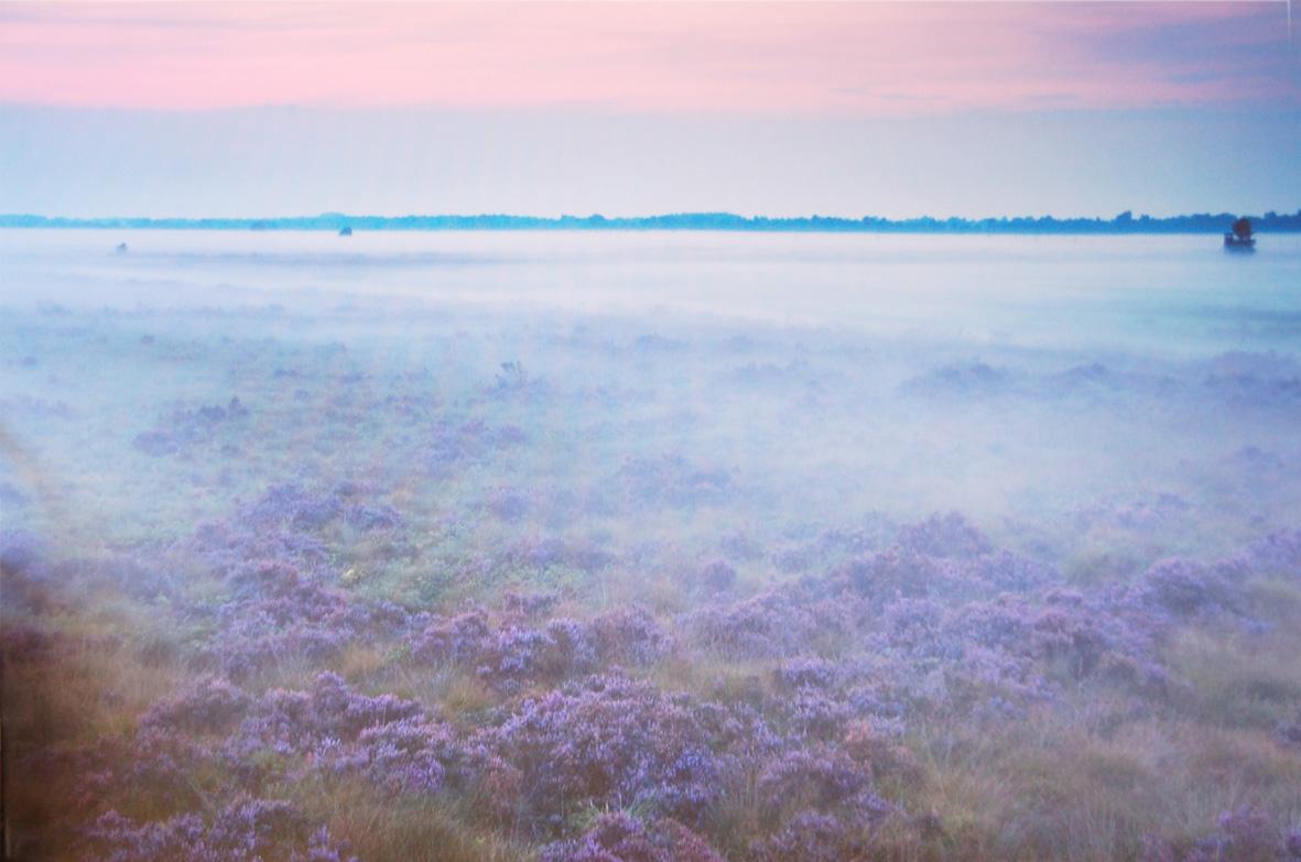 Heidelandschaft 50 x 75 cm